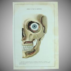 """Art Nouveau Print of the Human Skull """"Orbit of the eye and jaws"""" -  1907 Polychrome Lithograph"""