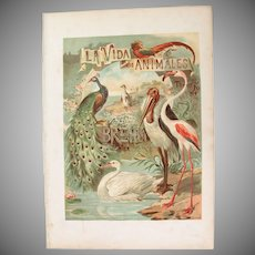 19th Century Print of Birds - Birds- 1882 Zoology Polychrome Lithograph