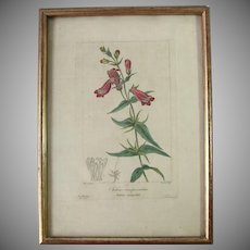 19th Century Floral Copper Engraving of Adriatic Bellflower by Pancrace Bessa HANDCOLORED