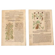 16th Century Renaissance Set of two Prints - Chickpeas, Beans, Viola and more - 1550's Botanical Woodcut (Hieronymus Bock)
