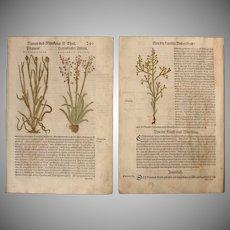 16th Century Renaissance Set of two Floral Prints - 1550's Botanical Woodcut (Hieronymus Bock)