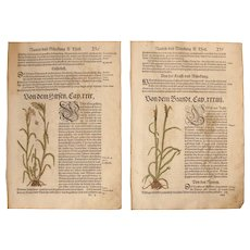 16th Century Renaissance Set of two Floral Prints - 1550's Botanical Woodcut (Hieronymus Bock)