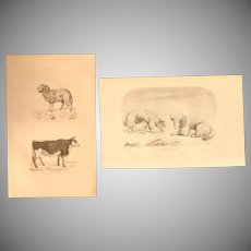 19th Century Set of two Prints of Yak, Cow & Sheep - 1860's Zoology Steel Engraving Mamals
