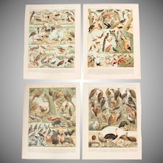 Art Nouveau Set of two Prints of Birds - 1900's Polychrome Lithographs