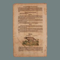 1570's Double Sided Original Handcolored Woodcut of a Civet