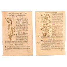 16th Century Renaissance Set of two floral Prints - Juncus & Algae - 1550's Botanical Woodcut (Hieronymus Bock)