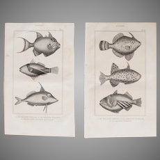 19th Century Set of 2 Fish Prints with Triggerfishes- 1836 Zoology Steel Engraving