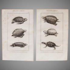 19th Century Set of 2 Turtle Prints - 1836 Zoology Steel Engraving