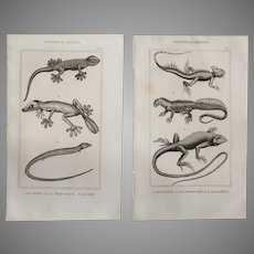 19th Century Set of 2 Reptile Prints - 1836 Zoology Steel Engraving
