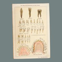 Art Nouveau Print about Human Teeth - 1900's Polychrome Lithograph