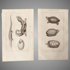 19th Century Set of 2 Turtle and Crocodile Prints - 1836 Zoology Steel Engraving