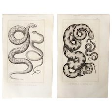 19th Century Set of 2 Snake Prints - 1836 Zoology Steel Engraving