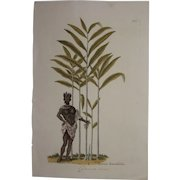 18th Century Floral Copper Engraving of Cardamom and a Native out of the Herbarium of ELIZABETH BLACKWELL HANDCOLORED