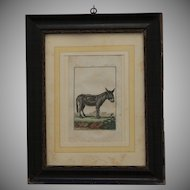 18th Century Handcolored Copper Engraving of a Donkey by Etienne Claude Voysard in a lovely 19th Century Frame