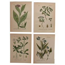 1880's Set of 4 Floral Lithographs - Flower & Botanical Prints