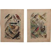 1840's Set of 2 Animal Engravings of Birds / Print of Fauna