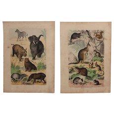 1840's Set of 2 Animal Engravings of Mammals / Print of Fauna