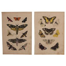 1840's Set of 2 Animal Engravings of Butterflies and Moths / Print of Fauna