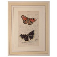 1830's Steel Engraving of two Butterflies - Peacock Butterfly and Camberwell Beauty by Wm. Lizars (Sir William Jardine)