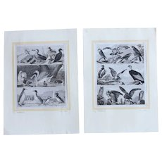 Set of Two 1850's Original Antique steel engravings - Birds