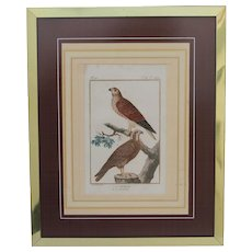 18th Century Copper Engraving of buzzard and another raptor from France -  HANDCOLORED