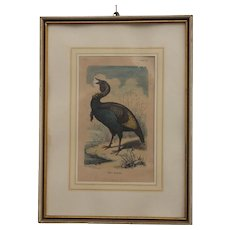 19th Century Steel Engraving of Wild Turkey from Germany - HANDCOLORED