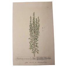 18th Century Floral Copper Engraving of Absinthium out of the Herbarium of ELIZABETH BLACKWELL HANDCOLORED