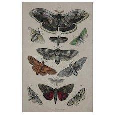 1840's Original Antique Lithograph of Butterflies / Moths