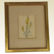 Beautiful Hand Coloured Botanical Etching of Linaria Italiea. Benjamin Maund C1820.