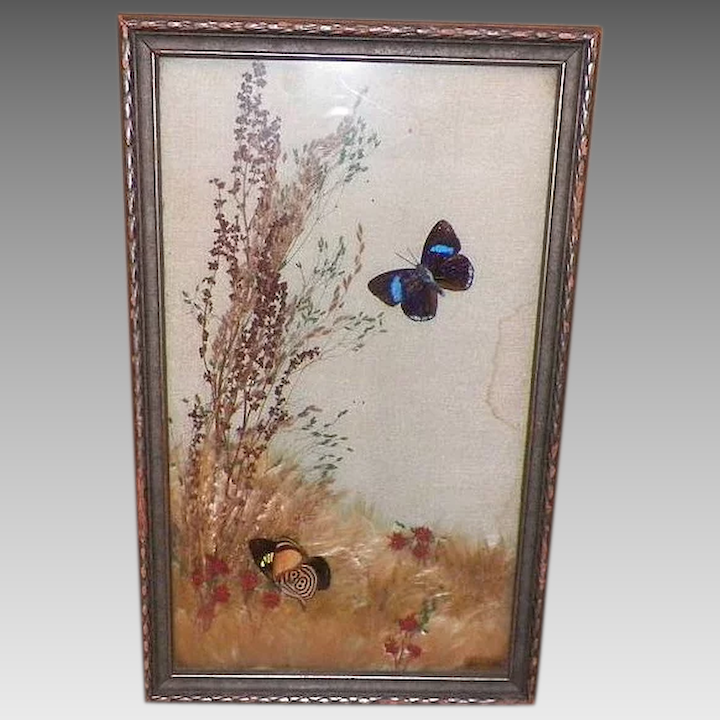 Vintage Framed Pressed Butterflies and Dried Flowers Under Glass