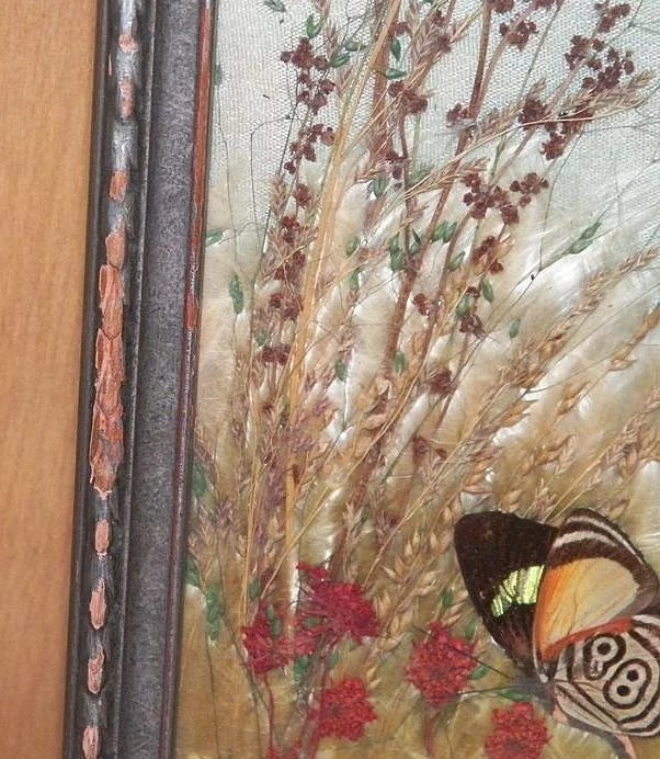 Vintage Framed Pressed Butterflies And Dried Flowers Under