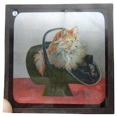 A Charming Victorian  Coloured Magic Lantern Slide Of A Cat In A Coal Scuttle