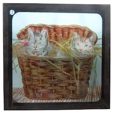 A Wonderful Victorian Coloured Magic Lantern Slide Of 2 Cats In A Basket