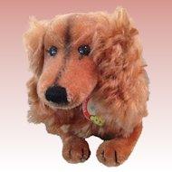 """Cute 14"""" Steiff Waldi dachshund"""