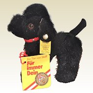 Cute Little Steiff Poodle Blacky Made in Austria