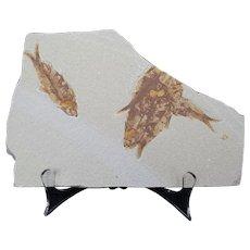 Striking Objet D'Art Fossil Plate