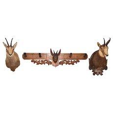 European Black Forest Chamois Display,  Taxidermy