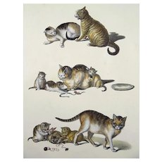 Gottfried Mind (1768-1814) - Cats at Play - Stone lithograph in the crayon manner - Hand coloured - 1824