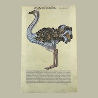 Conrad Gesner (1516-1565) - Ostrich - hand coloured woodcut - From First Folio Edition - 1557