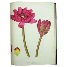 1806 William Hooker - PARADISUS LONDINENSIS - Quarto - 49 handcol. engravings