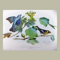 Edouard Traviès (1809-1865) Hand coloured stone Lithograph - INDIGO BIRD American Ornithology