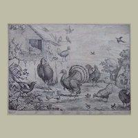 Francis Barlow - Illustrissimo heroi..  8 folio plates - Ornithology - 1685
