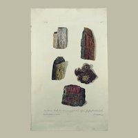 G. W. Knorr (1705-1761);  Palaeontology Fossils Mineralogy - Folio - Hand coloured - 1773