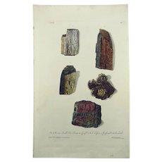 G. W. Knorr (1705-1761);  Paleontology Fossils Mineralogy - Folio - Hand coloured - 1773