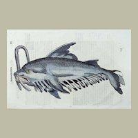 Cristoforo Coriolano / Adrovandi - Large folio woodcut - MONSTER CENTIPEDE Whale - 1638