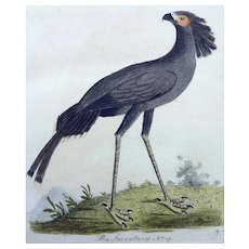 John Latham (1740-1837) - Secretary Bird - Original hand coloured engraving 1785