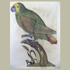 Conrad Gesner 1516-1565 FOLIO - 2 woodcuts - PARROTS - Ornithology - hand colored