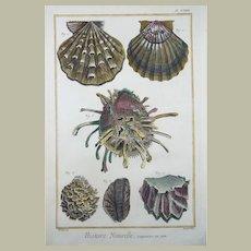 Martinet - Coquilles de Mer [Sea Shells] - hand coloured 39 cm engraving - 1751