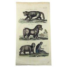 Matthäus Merian (1593-1650); Baboon Manticore Papio Guenon - Mythological Beasts - Folio engraving 1657