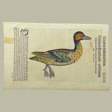 Conrad Gesner (1516-1565) - Garganey Duck - 1st Issue - Folio woodcut leaf